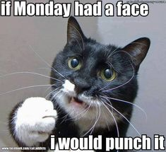 #monday #cat #grumpycat