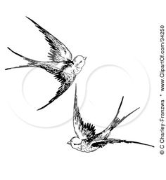 Google Image Result for http://images.clipartof.com/small/34250-Clipart-Illustration-Of-Two-Swallows-Flying-Together.jpg