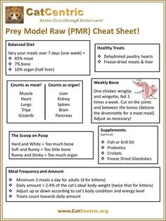 A one page Cheat Sheet that makes it easy to understand how to feed your kitties a prey model raw diet.