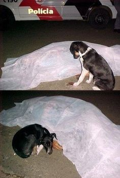 Man's Best Friend - funny pictures - funny photos - funny images - funny pics - funny quotes - funny animals @ humor