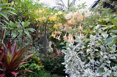 Tropical Garden Society of Sydney
