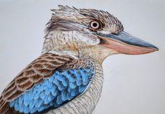 kookaburra blue paint - Google Search