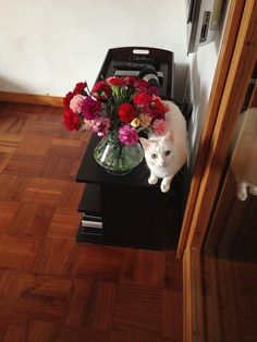 #cat and #flowers