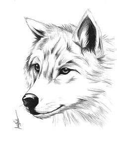 Tattoos in 2019 art sketches, wolf painting, art drawings. Pencil Art Drawings, Art Drawings Sketches, Easy Drawings, Animal Sketches, Animal Drawings, Wolf Sketch, Wolf Painting, Painting Art, Wolf Design