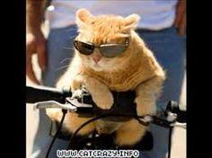 Bildergebnis für katzen lustige bilder