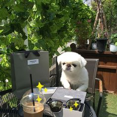 Under the hot sun, I enjoy coffee with dog and suglasses. Dog Coffee, Sunglasses, Hot, Outdoor Decor, Animals, Beautiful, Animales, Animaux, Animal