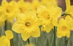 Flores amarillas que vas a querer tener en tu jardin 2