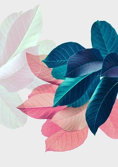 Blush Pink Pastel Leaves Wall Art by PrintsProject