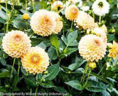Botanic Gardens 4852