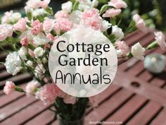 18 Best Cottage Garden Annuals