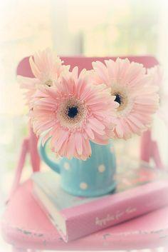 Pastel Pink and Blue Pretty Pastel, Pink Flowers, Beautiful Flowers, Gerbera Daisies, Pink Gerbera, Ballet Beautiful, Flower Wallpaper, Wallpaper Backgrounds, Iphone Wallpaper
