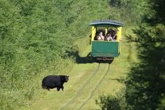 Michigan trolley ride-- along the way, you'll spot all sorts of amazing wildlife — from bears to wolves to moose. Don't forget to look up: hawks and other fascinating birds are also regularly seen in the vicinity. Michigan Vacations, Michigan Travel, Lake Michigan, Wisconsin, Michigan Usa, Munising Michigan, Michigan Blue, Vacation Places, Vacation Trips