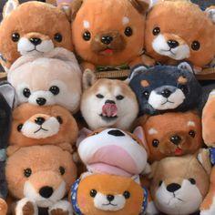 "4,491 Likes, 98 Comments - 痛快!ケンノンワールドへようこそ!! (@shibainu_kenta_nonta) on Instagram: ""《Shiba Shiba Face Lock》 ❇ カワキモノ VS なまもの 対決 しかし、多勢に無勢のケン太王子は只今「カワキモノ四面楚歌固め❗❗」を受け苦戦中…… …"""