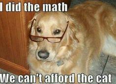 :) #golden #goldenretriever #dog #funny