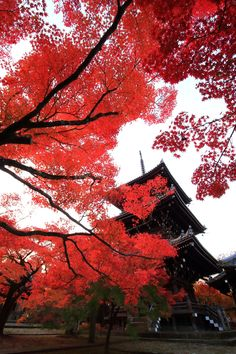 autumn leaves Sinnyo-do Temple Kyoto,Japan