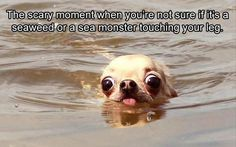 dog-memes-something-touches-you-in-the-ocean.jpg - Funny Dog Quotes - dog-memes-something-touches-you-in-the-ocean.jpg The post dog-memes-something-touches-you-in-the-ocean.jpg appeared first on Gag Dad. Funny Animal Photos, Funny Animal Jokes, Funny Dog Memes, Crazy Funny Memes, Cute Animal Pictures, Really Funny Memes, Funny Animal Pictures, Funny Relatable Memes, Animal Captions