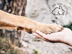 We love animals e PETA