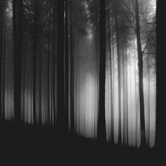Artizan black and white image of trees in a forest with soft light