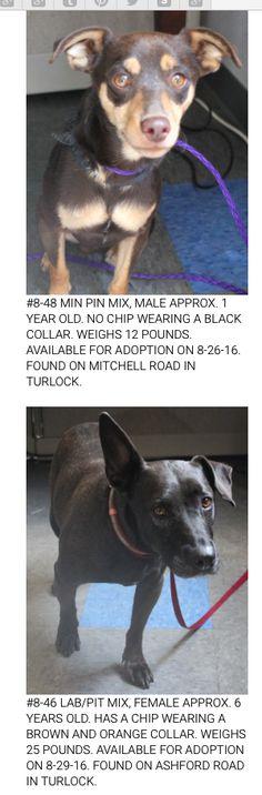 Animal Services 801 S. Walnut Turlock, CA 95380 (209) 656-3140 animalservices@turlock.ca.us