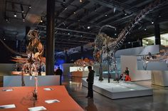 Morian_Hall_of_Paleontology_-_Houston_Museum_of_Natural_Science_2.JPG (6016×4000)