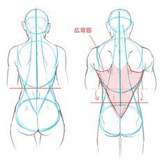 Female and male anatomy