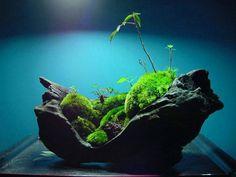de David Clavijo publicado en Kusamono/shitakusa - a Moss Garden for indoors Indoor Garden, Garden Art, Garden Plants, Outdoor Gardens, Ikebana, Micro Garden, Mini Bonsai, Design Jardin, Terrarium Plants