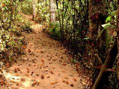 Mexico - El Santuario de las Mariposas Monarcas, se encuentra en la parte este de Michoacán y al Oeste del Estado de México, cada año de noviembre a marzo, miles de mariposas monarcas provenientes de Estados Unidos y Canadá realizan el viaje de su vida.