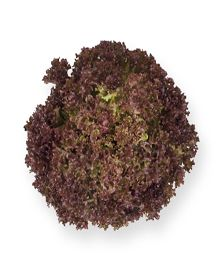 Anthony A great looking Lollo Rossa – a very intense red color. Suitable for cultivation of land and under cover in a greenhouse or plastic tunnel. It creates a large shower head. Large Shower Heads, Lettuce Seeds, Green Leaves, Red Color, Tea Time, Herbs, Plastic, Cover, Herb