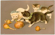 Postcard French 3 Cats Play with Onions Helena Maguire | eBay