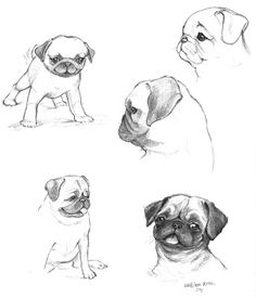 Pug Sketch Drawings Easy