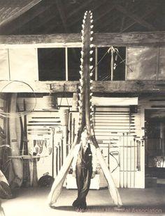 Nantucket Historical Association Photo Archives - Image P14996