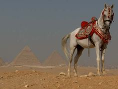 Cairo, Egypt and the Great Pyramids