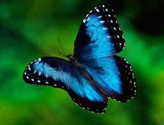 Descubre la leyenda de la enigmática mariposa azul y atrévete a transformar tu vida