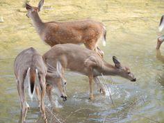 Kangaroo, Ohio, Deer, Animals, Baby Bjorn, Columbus Ohio, Animales, Animaux, Animal
