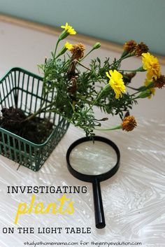 Science Sensory Activity: Investigate Flowers on a Light Table