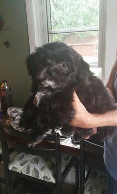 Meet Gus.
