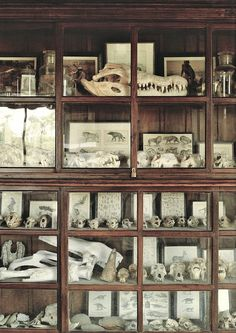 My childhood-dream is a house full of books and old items in vitrines. It would be so awesome.