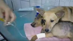 Ambos fueron rescatados de las calles, pero uno de ellos estaba muy herido y…
