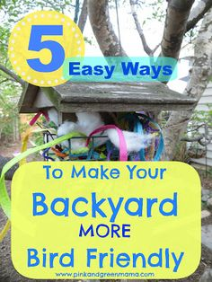 * 5 Easy Ways Make Your Backyard More Bird Friendly