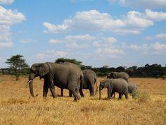 Elefantenfamilie  #wallpaper #Afrika