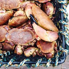 Seafood & the Scottish Highlands | A new blog article about the best seafood in Scotland!