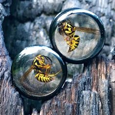 18mm+Yellowjacket+Wasp+Ear+Plugs+Gauges+Pair+11/16+by+MONIHOLLY118