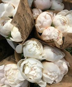 Spaece - Growing Peonies - How to Plant & Care for Peony Flowers Cream Aesthetic, Flower Aesthetic, Aesthetic Drawing, Aesthetic Style, Design Blog, No Rain, My Flower, Cactus Flower, Mini Cactus