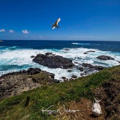 Tropic birds on the cliffs of Norfolk Island.  Landscape  #wonderful_places #beautifuldestinations #colors_of_the_day #awesomedreamplaces #discoverglobe #lifeofadventure #liveoutdoors #wildernessculture #discoverearth #goneoutdoors #welivetoexplore #epicexploring #awesomeglobe #fantastic_earth #awesomeearth #earthpix #travelawesome #bestvacations #ourplanetdaily #earthfocus #travellingvibe #travelstoke #theoutbound #natgeotravelpic #earth_deluxe #karenwillshawphototours #travel #twitter…