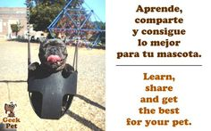 Aprende, comparte y consigue lo mejor para tu mascota / Learn, share and get the best for your pet #startup #Peru