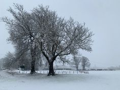 Ripon Racecourse in the snow Snow, Outdoor, Outdoors, Outdoor Games, The Great Outdoors, Eyes, Let It Snow