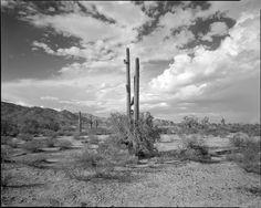 Maricopa, Arizona Landscape Black & White