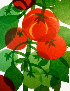 Tomatoes ripening by MsMoffatt