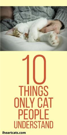 10 Things Only Cat People Understand