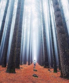 Situational Awareness at Sugar Pine Walk in Australia /// #travel #wanderlust